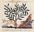 Irakischer Maler des Kräuterbuchs des Dioskurides 002.jpg