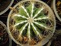 "Iran-qom-Cactus-The greenhouse of the thorn world گلخانه کاکتوس ""دنیای خار"" در روستای مبارک آباد قم- ایران 10.jpg"