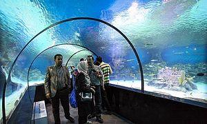 Isfahan aquarium 08
