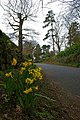 Ismays Road - geograph.org.uk - 731267.jpg