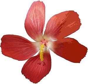 Une photo de fleur compressée en jpeg avec des compressions de plus
