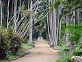 Jardim Botânico do Rio de Janeiro (3904269618).jpg