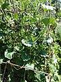 Jardins Rocambole, Corps-Nuds, France, 7-2019, sommier à ressort en support de végétaux.jpg