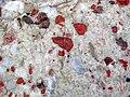 Jasper-quartz pebble conglomerate (Lorrain Formation, Paleoproterozoic, ~2.3 Ga; Ottertail Lake Northeast roadcut, near Bruce Mines, Ontario, Canada) 65 (40743185633).jpg