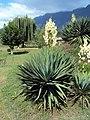 Jawaharlal Nehru Memorial Botanical Gardens, Srinagar 20.JPG