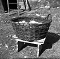 Jerbas (en roč manjka), Manče 1958.jpg
