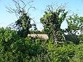 Jersey - panoramio (4).jpg
