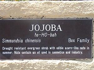 Jojoba - Plaque describing Jojoba in the Lost Dutchman State Park (Arizona)