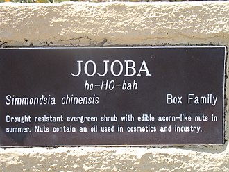 Jojoba - Plaque describing jojoba in the Lost Dutchman State Park (Arizona)