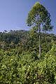 Jungle view. (3745785885).jpg