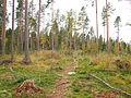 Jyväskylä - trail in Halssila 3.jpg