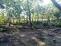 KURUMBAPATTI ZOOLOGICAL PARK, SALEM - panoramio.jpg