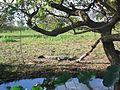 Kakadu National Park (2052486404).jpg