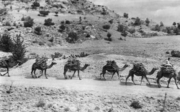 Karavanen med kameler drar förbi. Ajios Jakovos - SMVK - C02237.tif