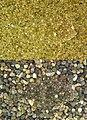 Kareius bicoloratus Camouflage.JPG