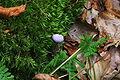 Kellerwald - Fungi - 005.jpg