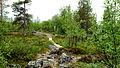 Kevo-Nationalpark-Finnland-2012-07-03-17-00--024.jpg