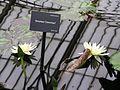 Kew Gardens 0399.JPG