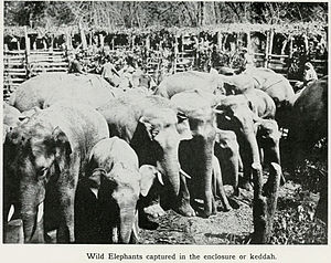 Khedda - Elephant stockade or Kheddah