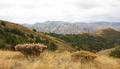 Khosrov Forest State Reserve 08092019 (1) 01.png