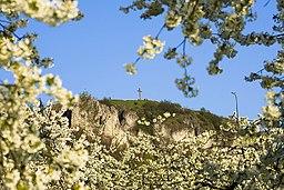 Kirschbluete-Walberla