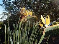 Kirstenbosch National Botanical Garden by ArmAg (26).jpg