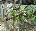 Koala CMZ 3.jpg