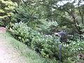 Kobe Municipal Arboretum in 2013-6-22 No,69.JPG