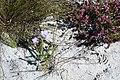 Kogelberg Nature Reserve Flora.jpg