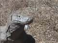 Komodo dragon neck skin.png