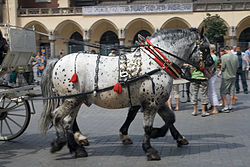 Horse Harness Wikipedia