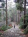 Kumano Kodo pilgrimage route Daimon-zaka World heritage 熊野古道 大門坂52.JPG