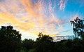 Kvällssol över trädgården (9327692611).jpg