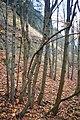 LSG Sudmerberg - Herbstwald (1).jpg