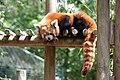 La-Palmyre-zoo 052-Petit-Panda.jpg