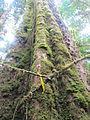 La Amistad Panama Biosphere Reserve - Parque Nacional Volcan Baru (a core zone) 19.JPG