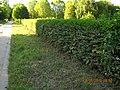 Ladenburg, Germany - panoramio (39).jpg