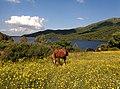 Lago del Leni - versante sud ovest.jpg