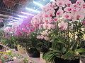 Laika ac Flower Market (6374159335).jpg
