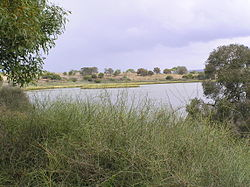 Lake Connewarre from Tait Point 05.jpg