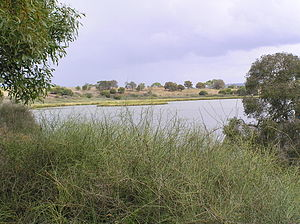 Lake Connewarre - View of lake from Tait Point