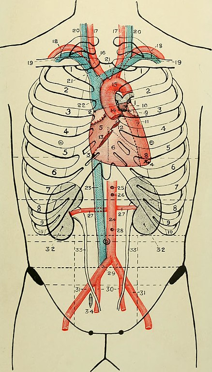 Filelandmarks And Surface Markings Of The Human Body 1913