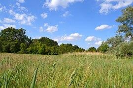 Landschaftsschutzgebiet Erpetal in Berlin-Friedrichshagen Mai 2014 - 27.jpg
