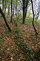 Landschaftsschutzgebiet Kühlung - Nienhäger Holz (Gespensterwald) (48).jpg