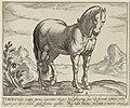 Landschap met paard uit Turkije. NL-HlmNHA 1477 53011501.JPG