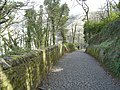 Lane to Clovelly - panoramio.jpg