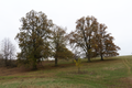 Lauterbach Frischborn Eisenbach Quercus Pastures Autumn Baronenweg E.png