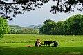 Lawn - Trengwainton Garden - Cornwall, England - DSC02570.jpg