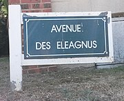 Le Touquet-Paris-Plage 2019 - Avenue des Eleagnus (Whitley).jpg