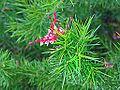 Le jardin des plantes (Nantes) (9221366185).jpg